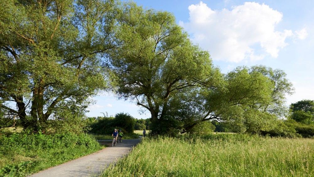 Wege in den Schwanheimer Wiesen